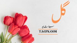 Read more about the article Gull By Seema Shahid Complete Novel Download PDF